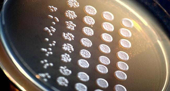 moi truong nuoi cay saccharomyces cerevisiae